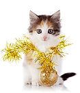 bigstock-Kitten-With-A-Festive-Garland-5