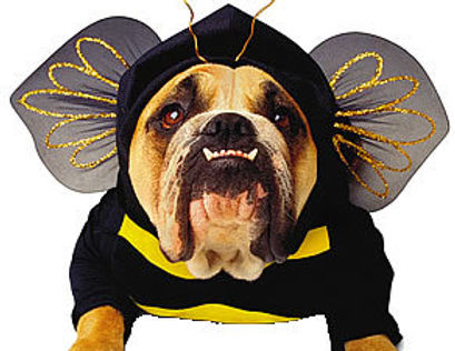 bumble+bee+bulldog.jpg