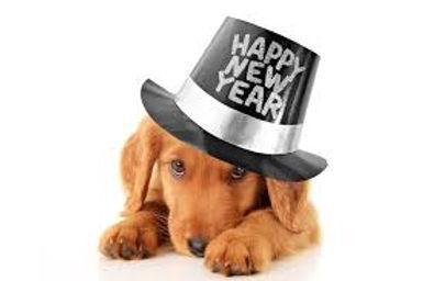 new years dachshund puppy.jpg
