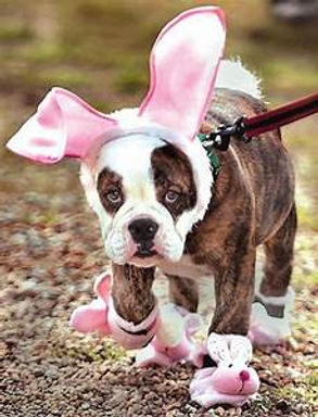 easter puppy with booties.jpg