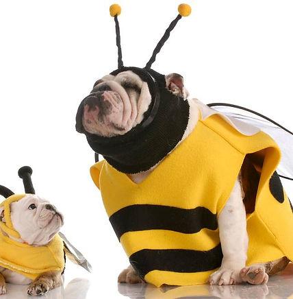 halloween bulldog bumblebees.jpg