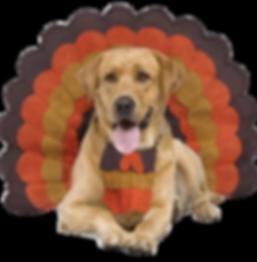 Thanksgiving Labrador turkey.png