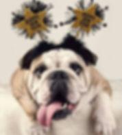NewYearsBulldog.jpg