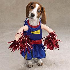 halloween beagle cheerleader.jpg
