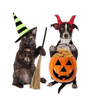 halloweentreats.jpg