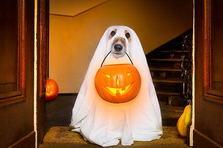 halloween ghost dog 2.jpg