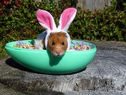 easter bunny hamster egg.jpg