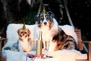 new years champagne dogs.jpg