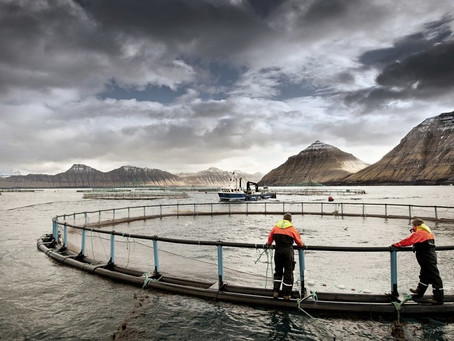 Forbes interview: Why This Danish Salmon Company's Stock Price Could Double
