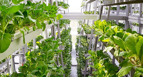 vertical-farms-singapore-1.1476627955.jp