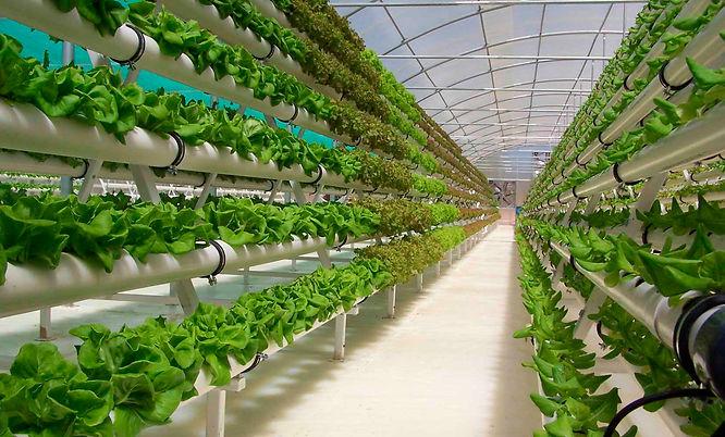 Vertical-Farming-Market.jpg