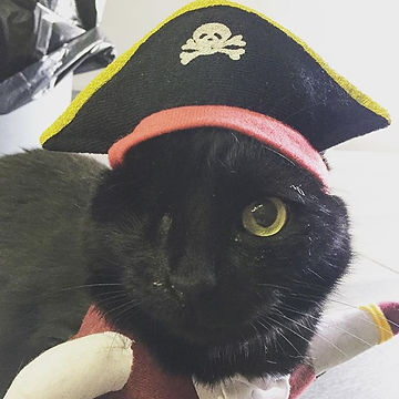 Captain Morgan in his pirate costume.jpg