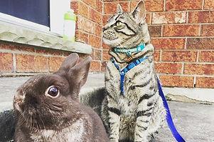 That's MY Easter Bunny!  Gizmo loves his rabbit!  #vet #veterinarymedicine #animals  #vettechnician