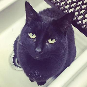 Frou Frou in the sink - as usual.jpg