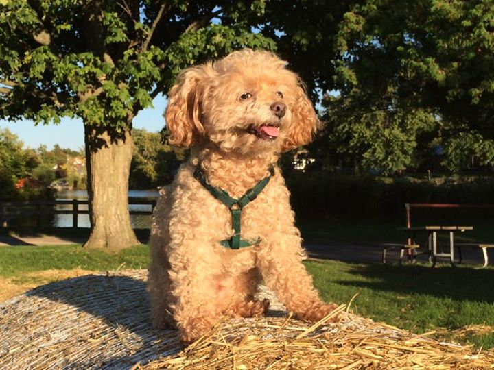 Rupert on a round straw bale at Fairy La