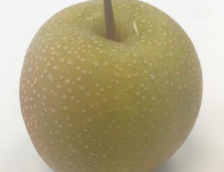 תפוח או אגס - חלק ראשון משניים