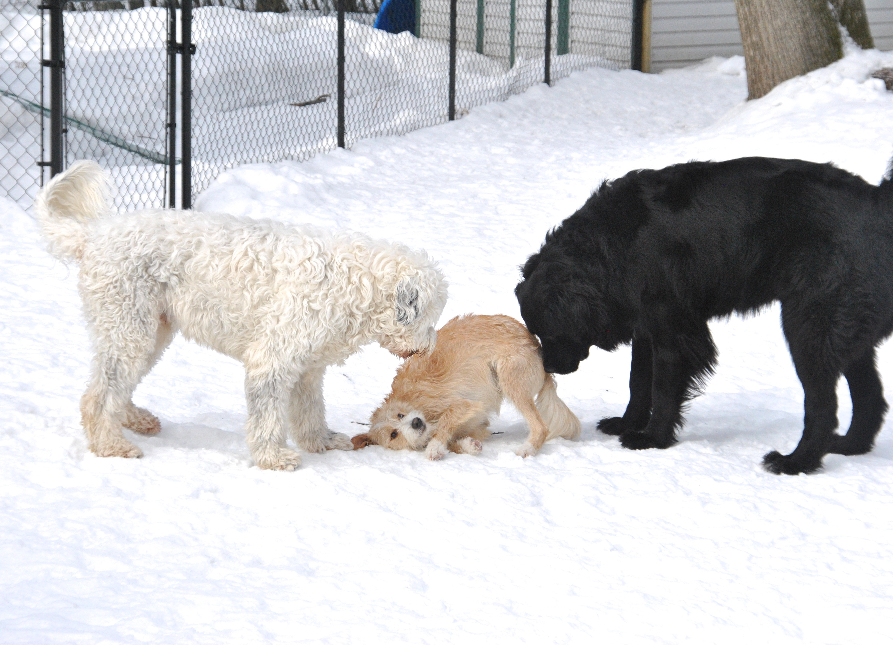 Old_young_dogs_daycare