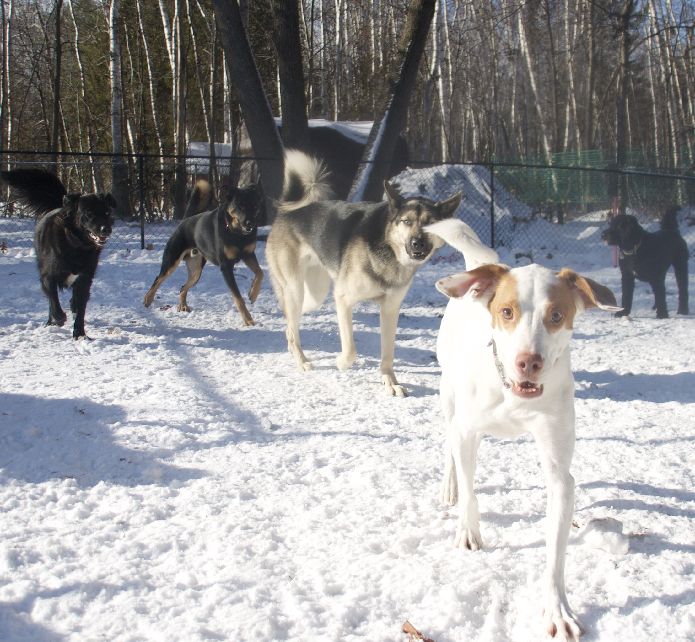 Dogs_snow_daycare