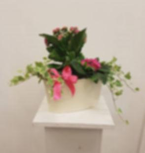 Plants plants plants! _#florist #flowers