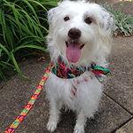 white dog2.jpg