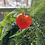 Thumbnail: Hand-blown Glass Hearts