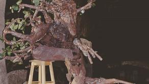 MangroveMan Art Council Funded
