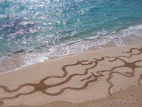 Brittle Star Parade Beach Art Winner