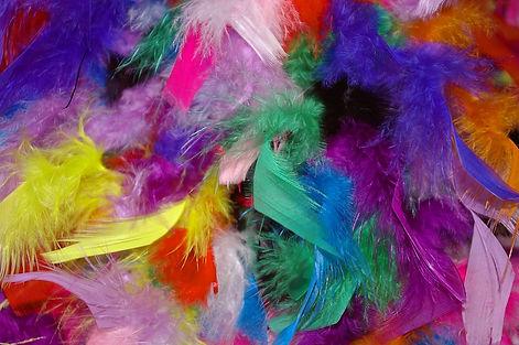 feather-1128204_960_720.jpg