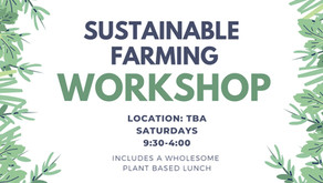 Launching workshops in the fall