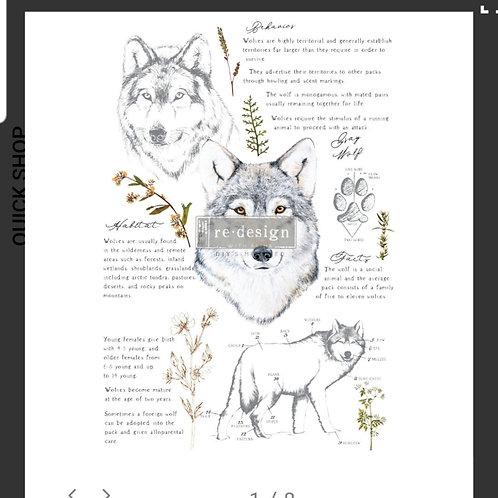 Transfer Gray Wolf, Prima
