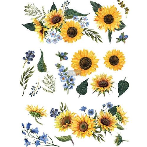 Transfer , sunflower fields, Prima