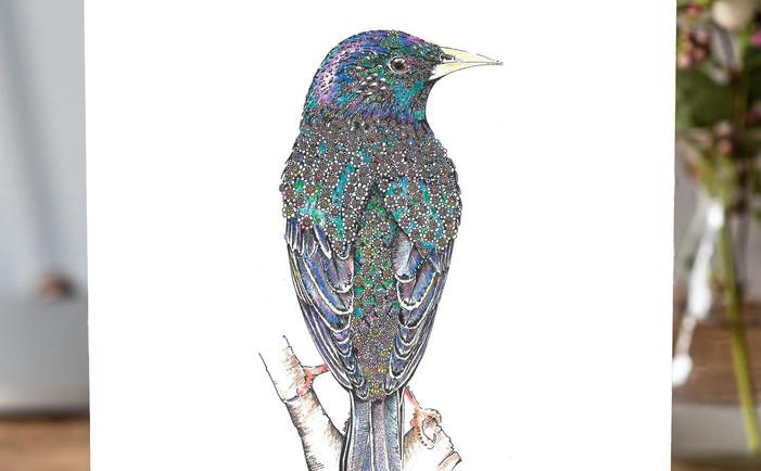 starling super.jpg