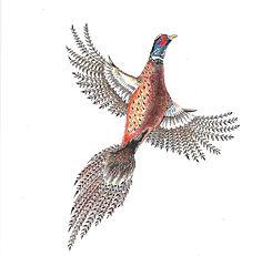 scan of flying pheasant_edited.jpg