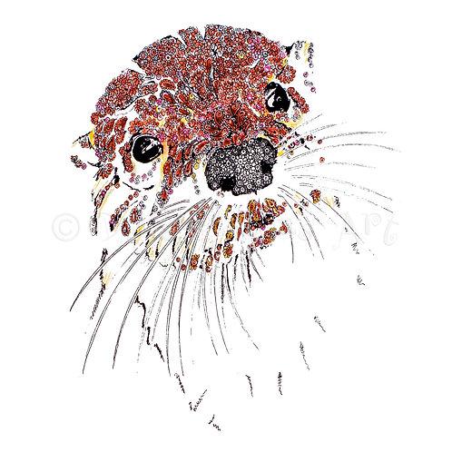 Otter [010]