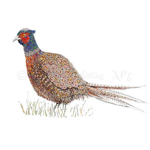 Pheasant [011]