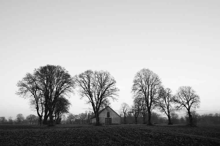 grayscale-photo-of-house-near-bare-trees