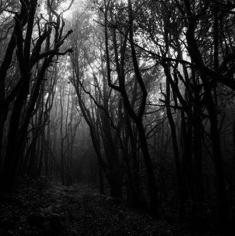 photo-of-forest-with-fog-1671324_edited.