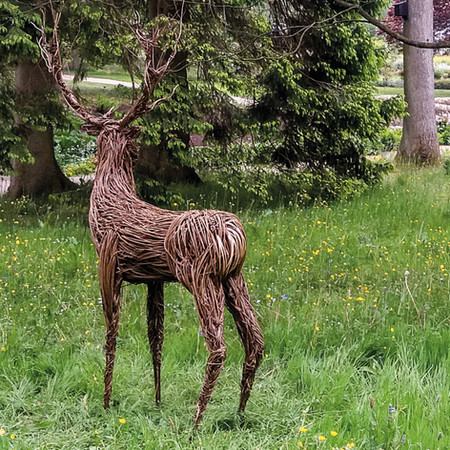 willow-stag-2.jpg