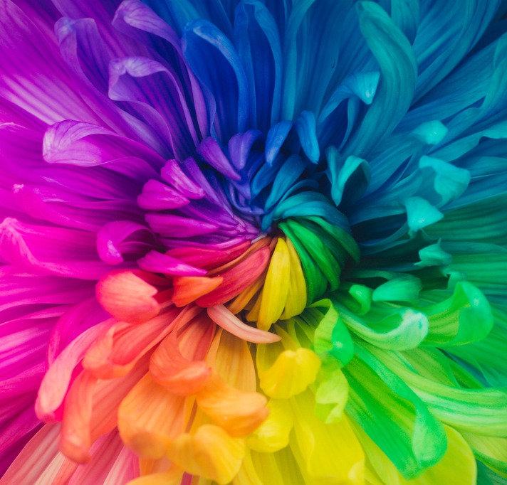 Online Colour Analysis workshop