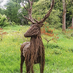 willow-stag-1.jpg