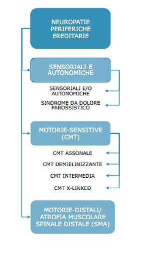 neuropatie.png