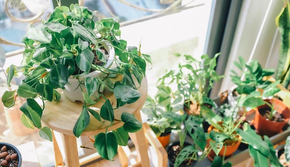 plants green propagate gift