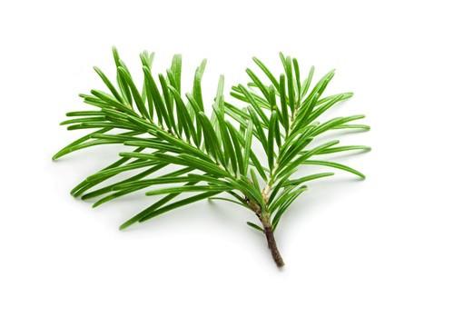 Green Needle Leaf
