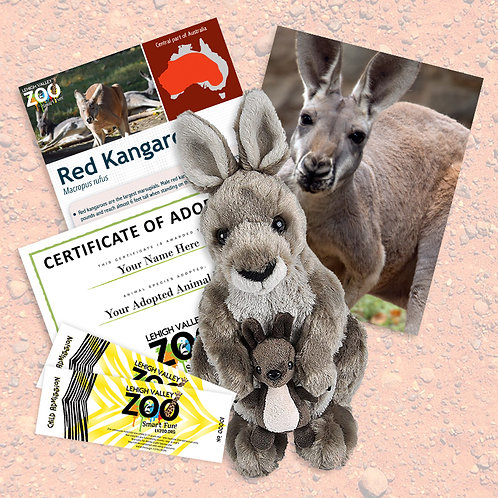 ADOPT An Animal - Red Kangaroo