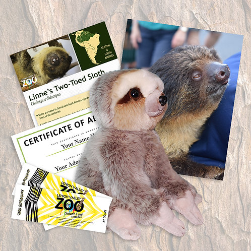 ADOPT An Animal - Linnaeus's Sloth