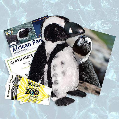 ADOPT An Animal - African Penguin