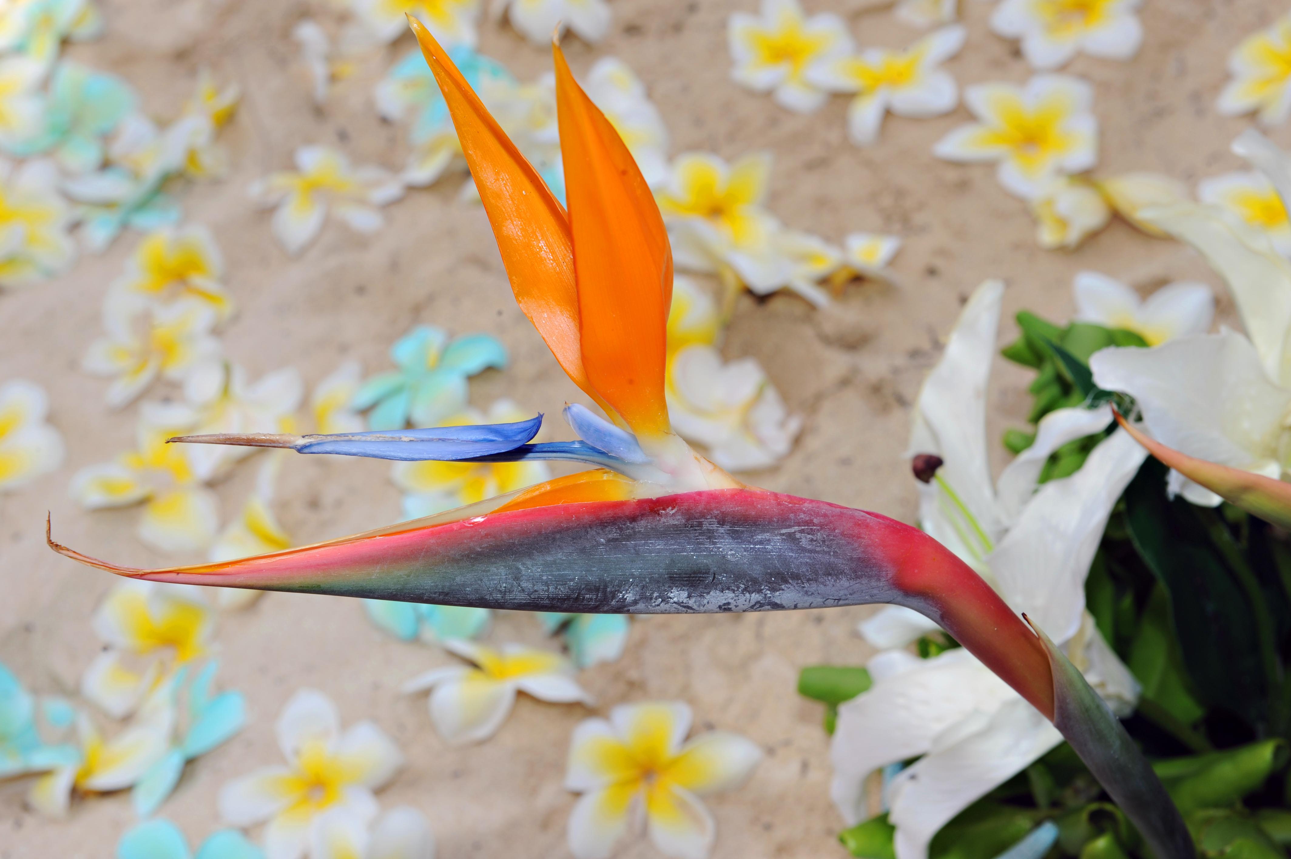 Alohaislandweddings.com- Hawaiian wedding in hawaii-116