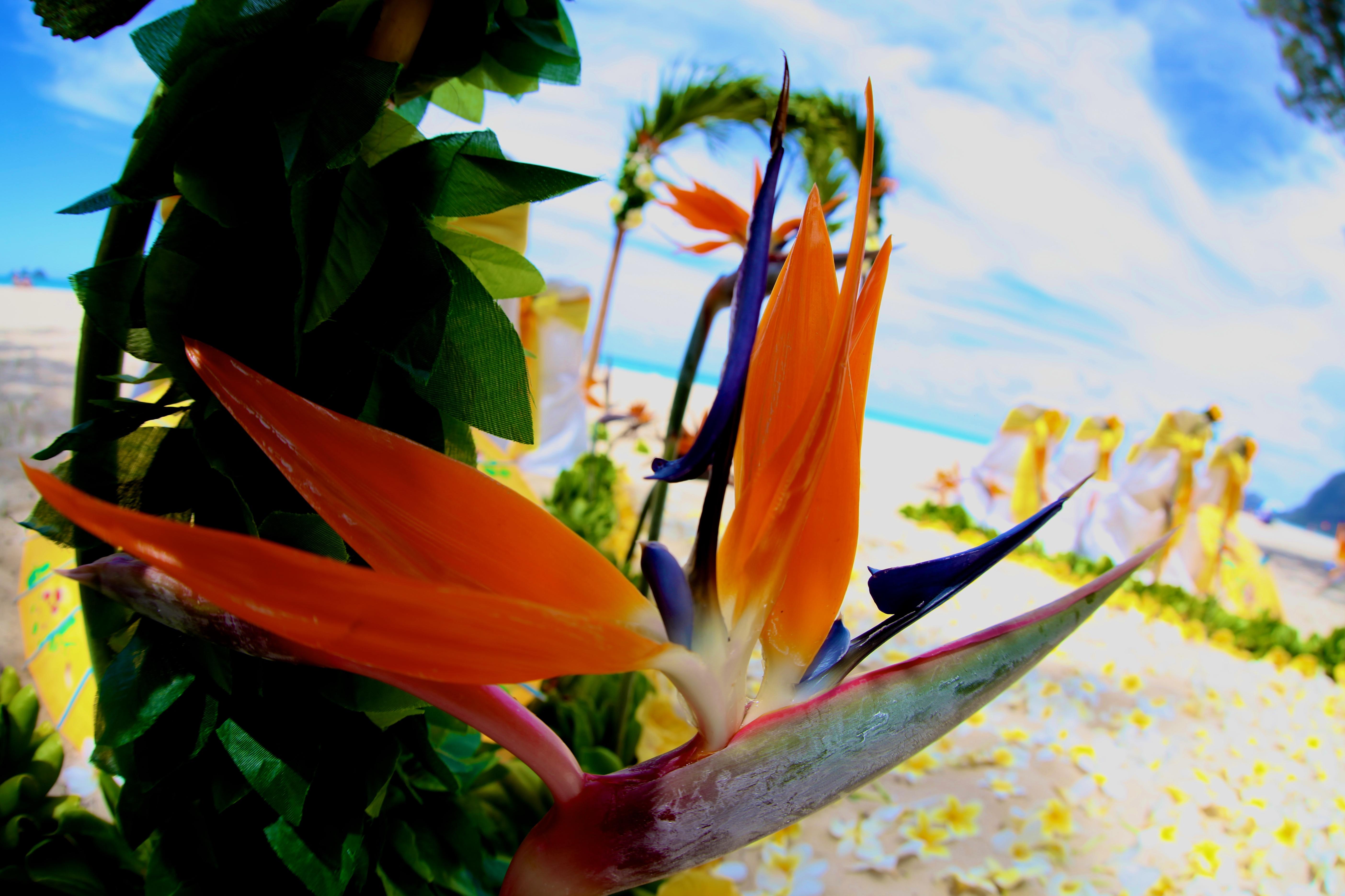 Beach wedding Hawaii 12