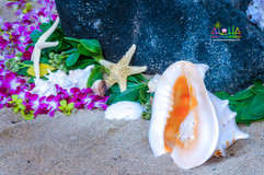 Beach-weddings-4.jpg