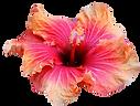 Flowers hawaii .png